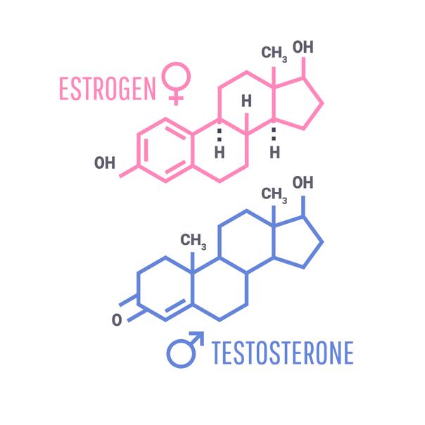 Las hormonas masculinas y femeninas